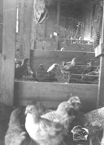 Rockingham, Co., VA, poorly-arranged poultry brooder house