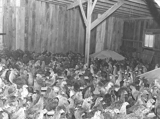 Rockingham Co., VA, poultry house of Raymond Sager