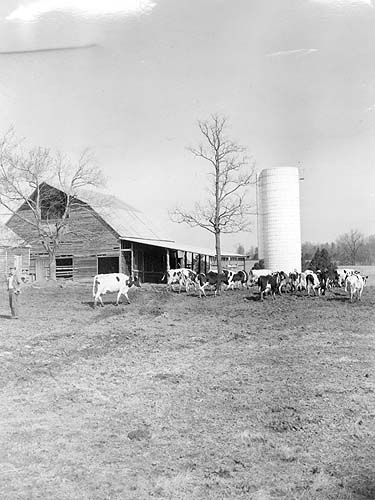 Herd and buildings on Dick Forester farm in Nottoway County, Virginia