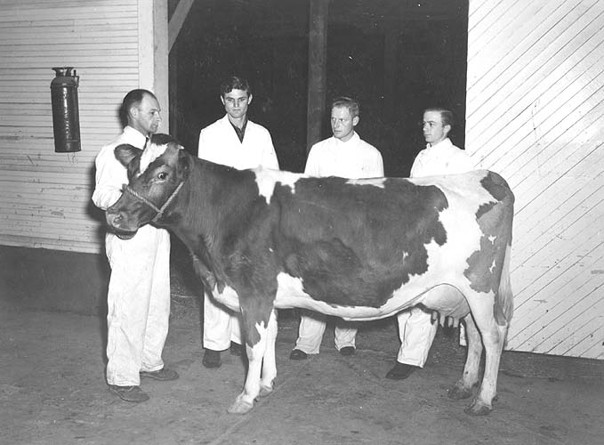 Students and good dairy cow