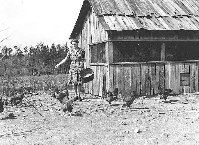 Goochland Co., VA, Mrs. Williamson feeding chickens in front of the pouldtry house which she constructed